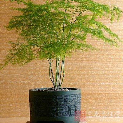 净化空气的室内植物 家里养这些可以长寿(2)