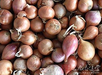 鳞茎卵圆形,长约5cm,直径2-2.5cm,鳞片肥厚,紫红色,无膜质包被.