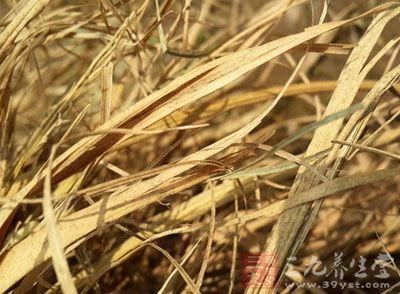 药材基源:为禾本科植物稻及糯稻的茎叶