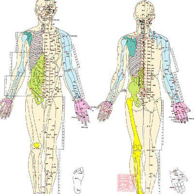 人体血分布图_经络是遍布人体全身的\