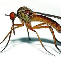 夏季驱蚊虫偏方 八大妙招帮你赶跑蚊虫