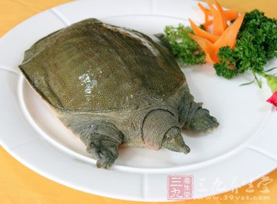 高蛋白、高碳水化合物、低脂肪、高维生素类:如甲鱼