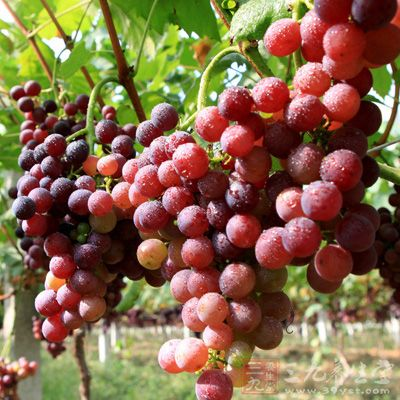 葡萄的营养价值非常高