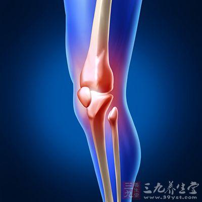 膝盖骨滑膜的结构图