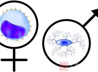 如果人类两性间也存在相似的差异,这将对疼痛治疗的发展产生巨大影响