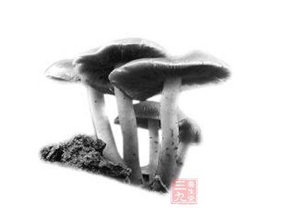 冒险岛花蘑菇伤害皮肤