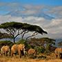 非洲旅游的禁忌