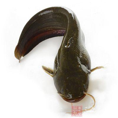 主料:新鲜的鲶鱼500g