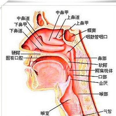 鼻子部位结构分析图