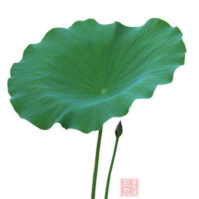 背景 壁纸 绿色 绿叶 树叶 植物 桌面 400_400