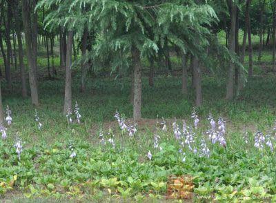 春季养生 如何利用春捂防春火