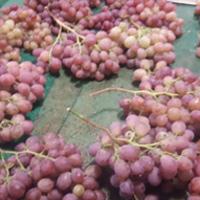 葡萄吃多了的结果 葡萄能多吃吗