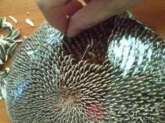 瓜子儿童手工制作动物