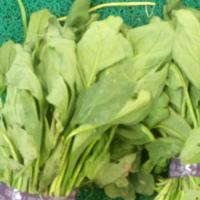 菠菜的功效与作用 它能促进新陈代谢吗