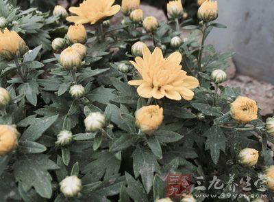 金壬化、连翘、七叶一枝花、菊花各8克薄荷5克