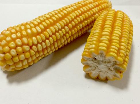 玉米抗衰排毒還治病