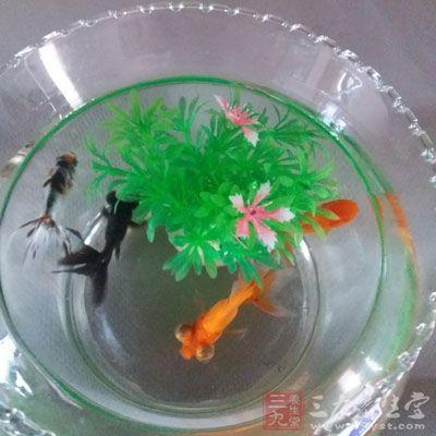 鱼缸摆放有技巧养鱼数量风水是王道