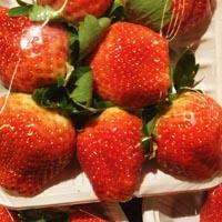 草莓的功效与作用 常吃这物能健脑