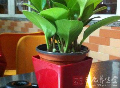 家居风水植物如何选择