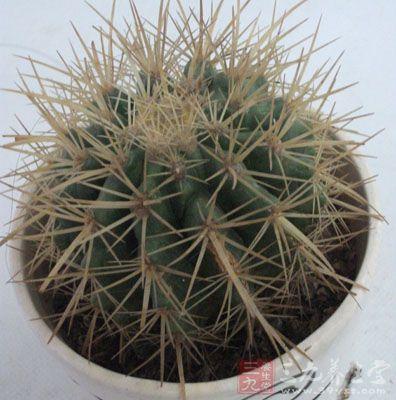 仙人掌这类有刺的植物也是不宜在财位摆放