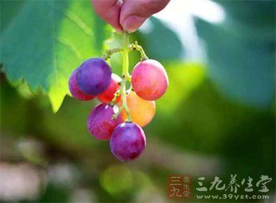 沟中郁郁葱葱,栽种了近百种葡萄