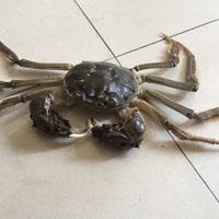 螃蟹的功效与作用 吃螃蟹能治疗多种病症