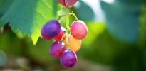 吐鲁番旅游 爱吃水果必去这里