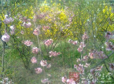 立春的含義 立春究竟代表著什么
