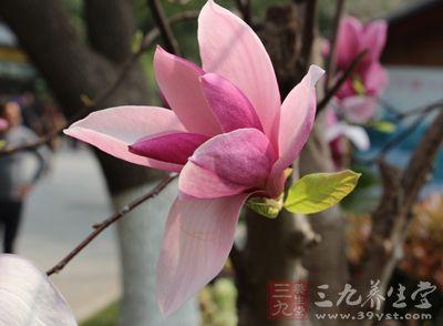 立春时节遵循三大转变让你换季不生病