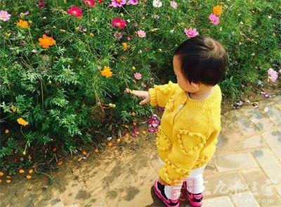 还有各种玫瑰和野花,有大片的绿地