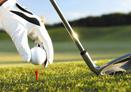 高尔夫用品 了解这些学打高球