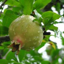 雨水养生多吃水果身体好
