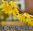 立春时节若何防病