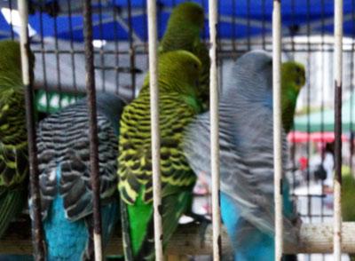 男子爱养鸟致腹泻险丧命 注意食源性感染