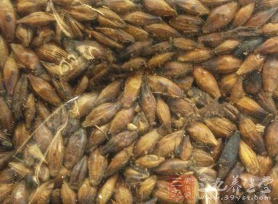 大麦具有健脾消食、除热止渴、下气利水等功效