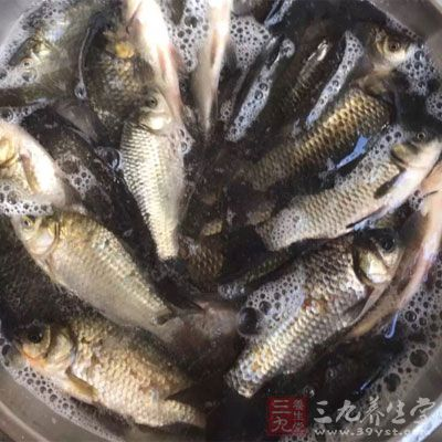 优良的蛋白质,包括新鲜的鱼类、肉类