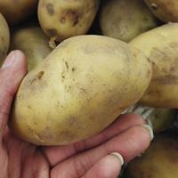 土豆的营养价值 土豆做主食有三大好处