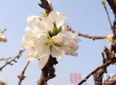 春分的含义 春分的由来及养生须知