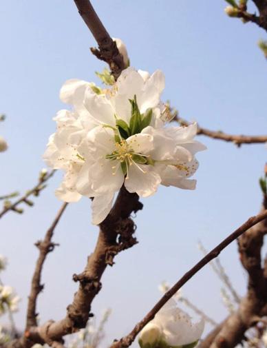二十四節氣中的春分究竟有哪些含義
