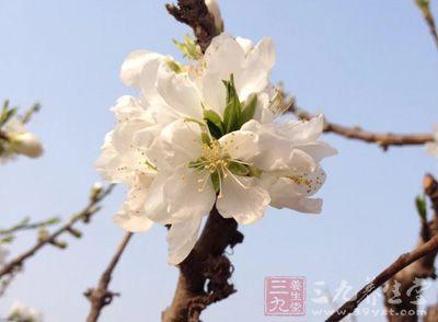 春分养生 春分6个秘诀健康养生