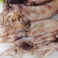 墨鱼的功效与作用 吃墨鱼有健胃助阳功效