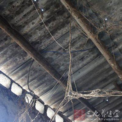 作坊屋顶结满蜘蛛网图片