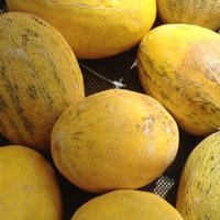 吃哈密瓜的好处 能预防癌症还能养颜护眼