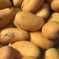 小芒果的功效 吃小芒果能抗癌还能防晕车