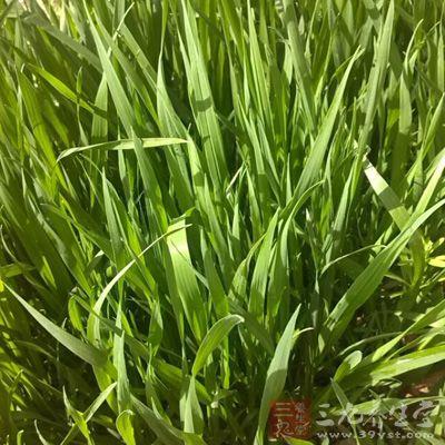 水稻大面积育秧,加快玉米播种和甘薯育苗进度