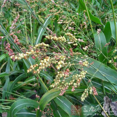 春天播下的谷子、玉米、高粱、棉花、蔬菜等