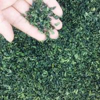 绿茶的功效 常喝绿茶能抗癌还能降血脂