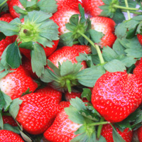 草莓的功效与作用 草莓能够抑制食管癌