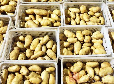 马铃薯能供给人体大量有特殊保护作用的黏液蛋白
