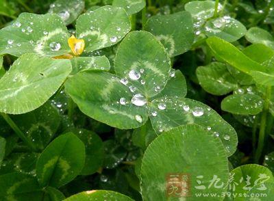 谷雨时节养生 这样做身体更健康